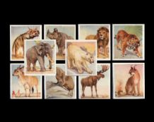 Cigarette cards Animal Studies. Elephant, Polar Bear